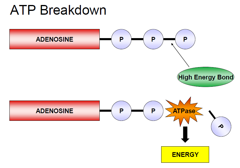 A2 PE Energy Concepts null